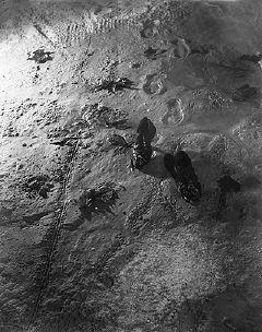 Dora Maar, Empreintes de pieds sur le sable