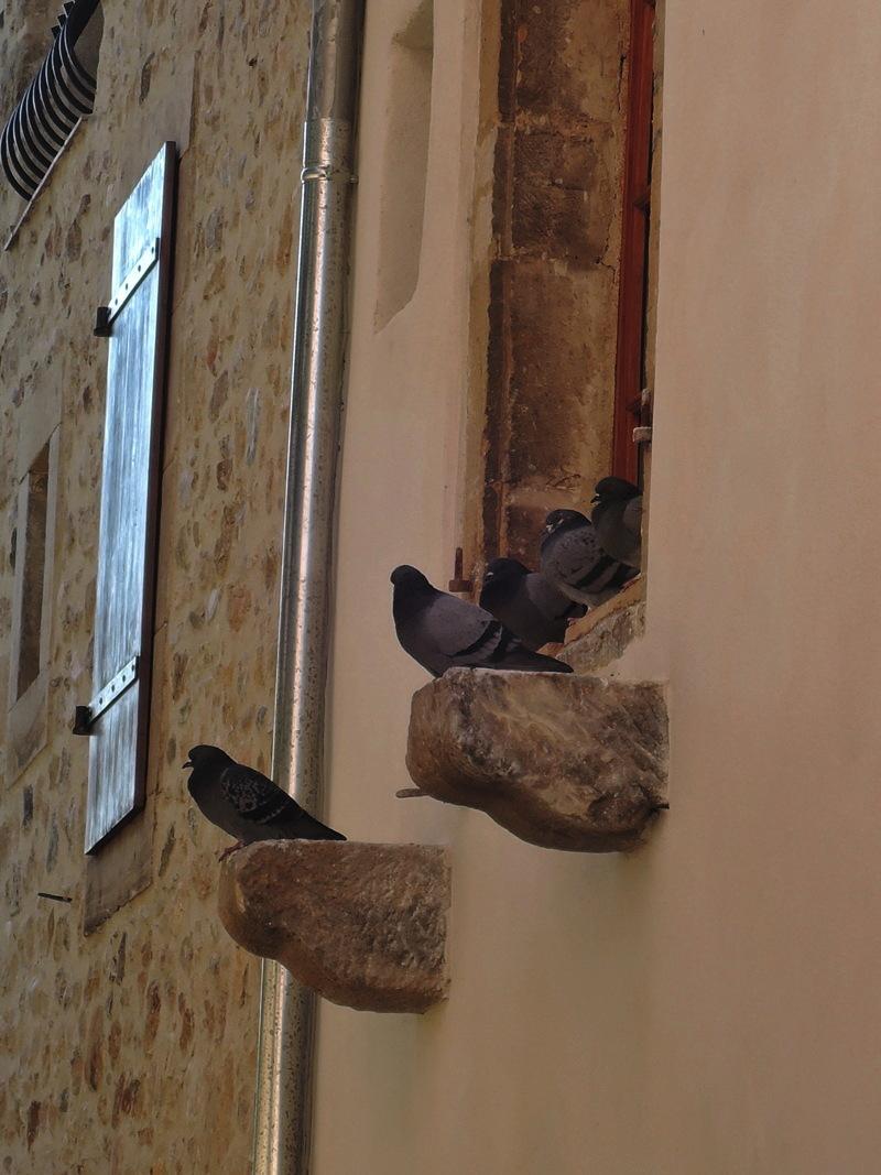 alet_pigeons.jpg